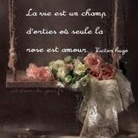 La vie est un champ d'orties où seule la rose est amour.