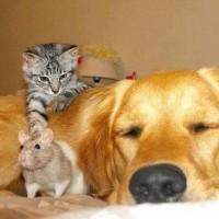 Trois sortes d'amitié sont profitables : l'amitié des honnêtes gens, des gens sincères et des gens avisés. Trois sortes d'amitié sont dommageables : l'amitié des flatteurs, des hypocrites et des discutailleurs.