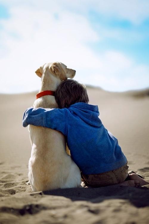 Best Friend Dogs Hugging