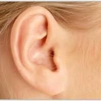 Une oreille sage n'écoute que les mots émis par une langue réfléchie.