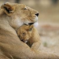L'amour d'une mère est universel.