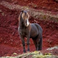 Le  cheval  : La plus noble conquête que l' homme  ait jamais faite est celle de ce fier et fougueux animal, qui partage avec lui les fatigues de la guerre et la gloire des combats.