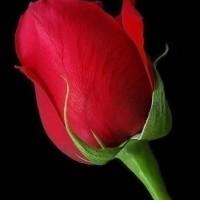 L'amour nous impose sa volonté et notre coeur lui obéit avec ou sans notre consentement.