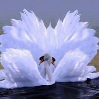 L'amour est un vol savoureux de deux oiseaux vers le bonheur du coeur et la jouissance de l'âme.